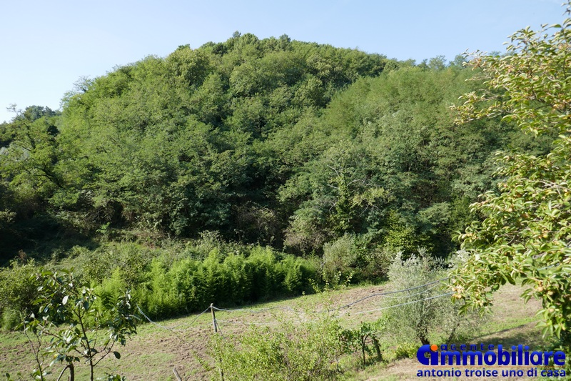 pistoia-vendita-podere-terreno-annesso-rustico-bosco-uliveto-3