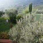 vendesi pistoia quarrata colonica panoramica giardino 32